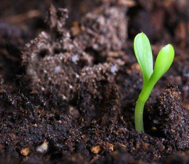 Bitki Besin Elementleri